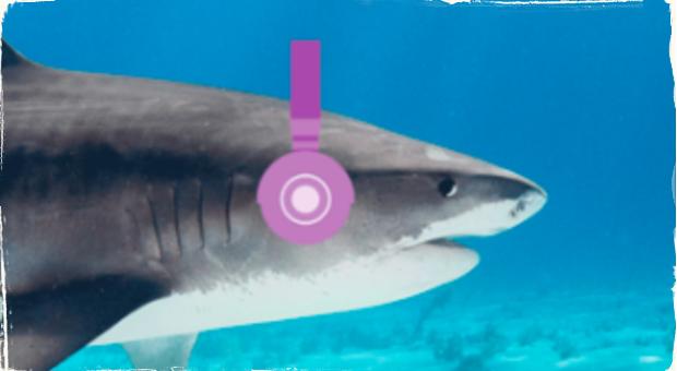 Oceán plný jazzu: Nová štúdia ukazuje, že žralokom sa páči jazz